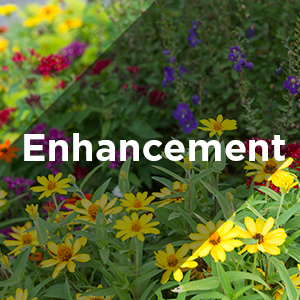 enhancement services