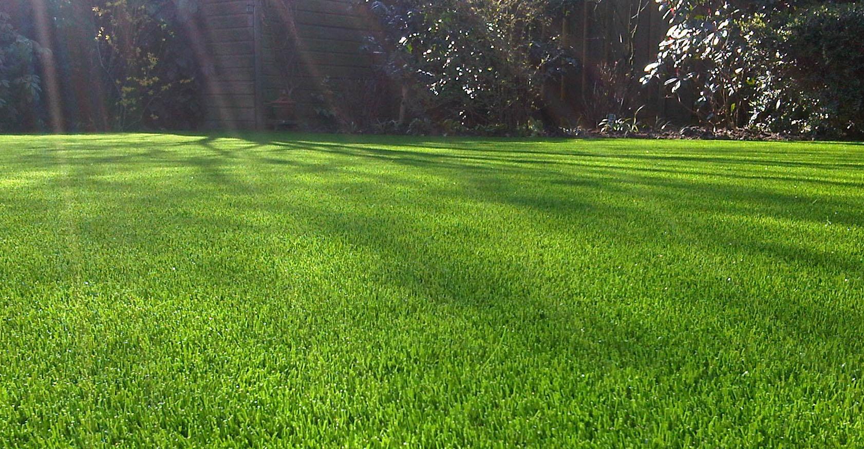 grass gratr.jpg
