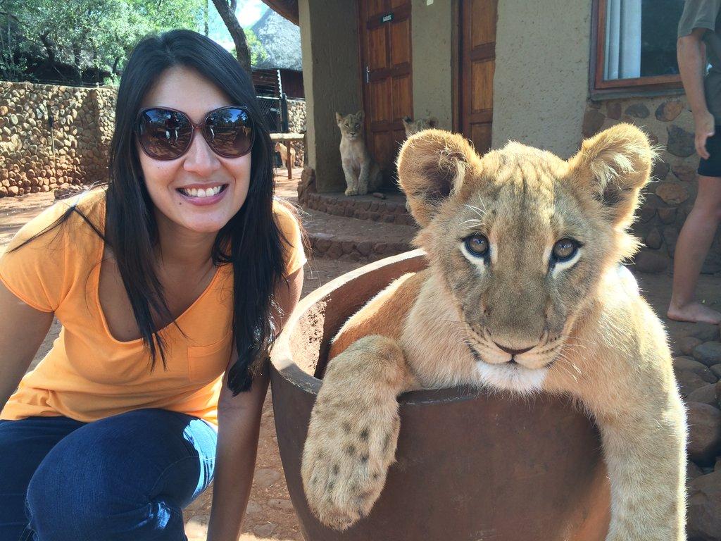 Leões adolescentes Ukutula Lodge