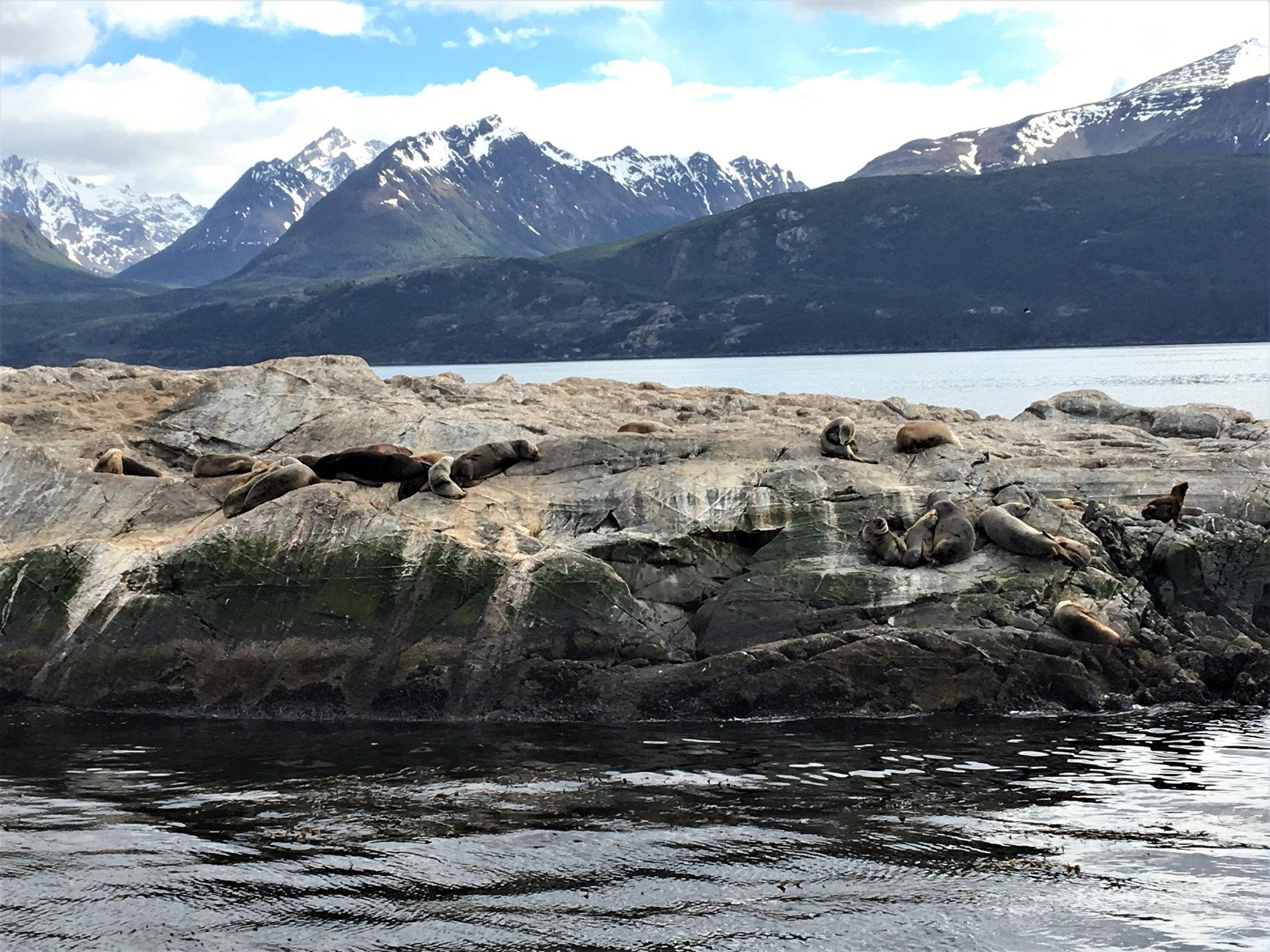 passeio de barco leos marinhos ushuaia fim do mundo leroyviagens.jpg