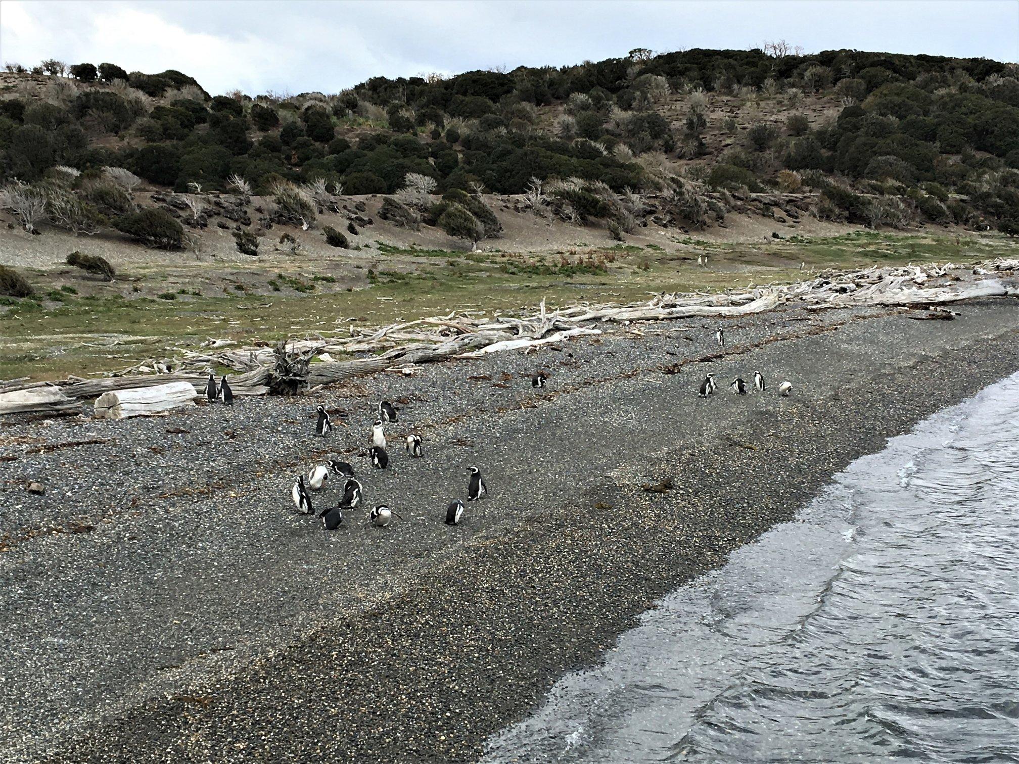pinguinera ushuaia fim do mundo leroy viagens.jpg