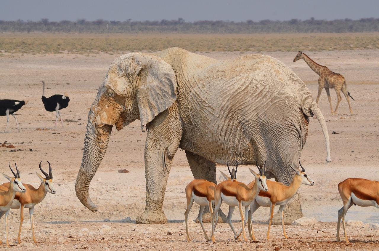 namibia14.jpg