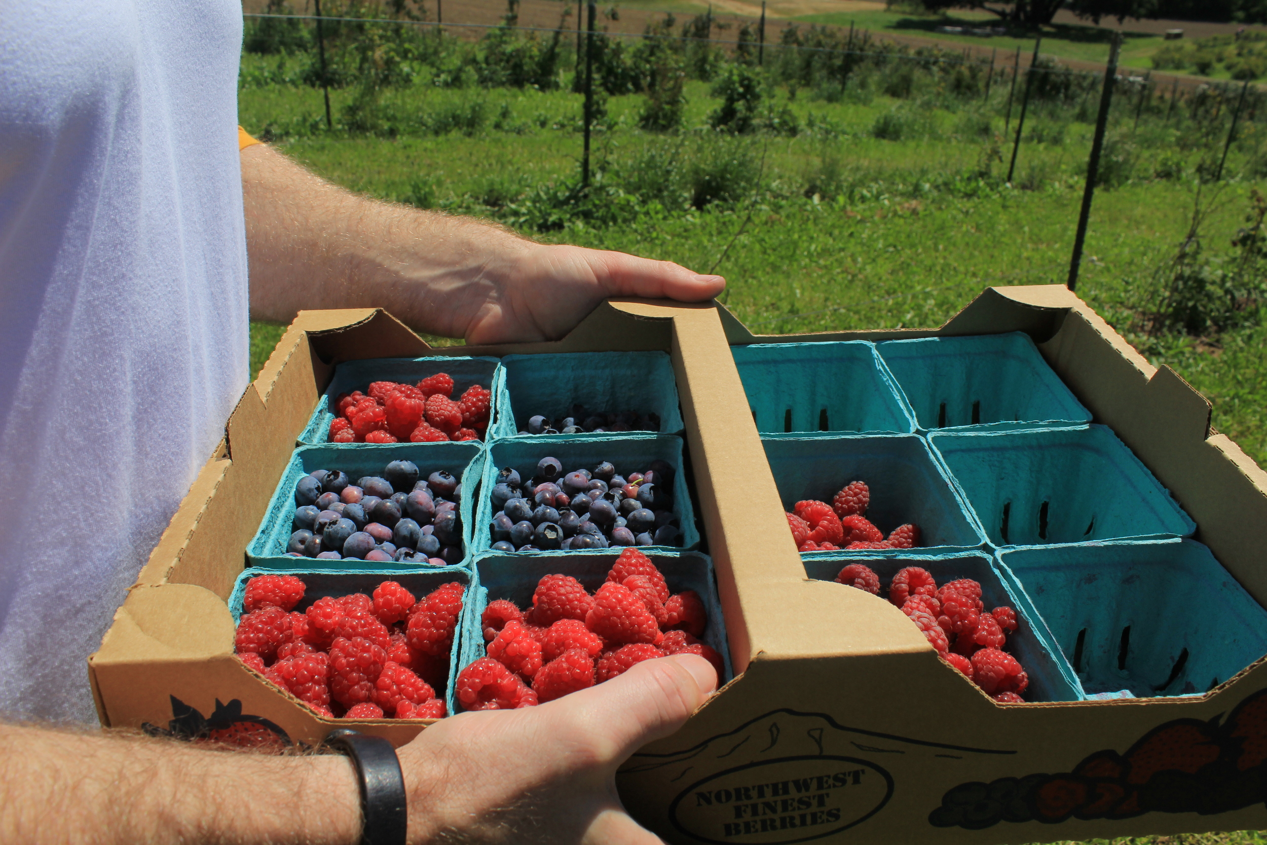 FRESH FARM FRUIT PICKING