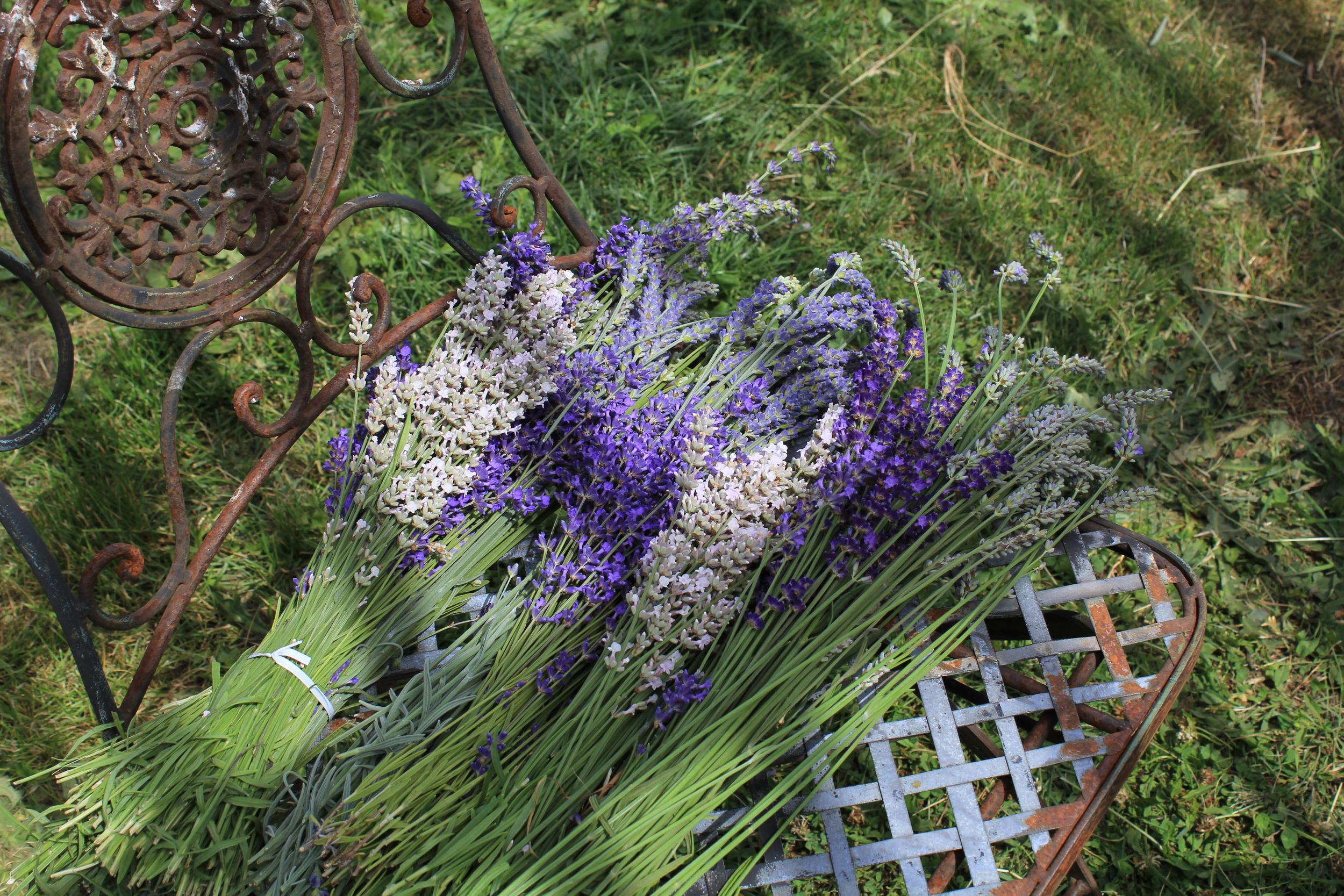 06-22 Lavender (21).JPG