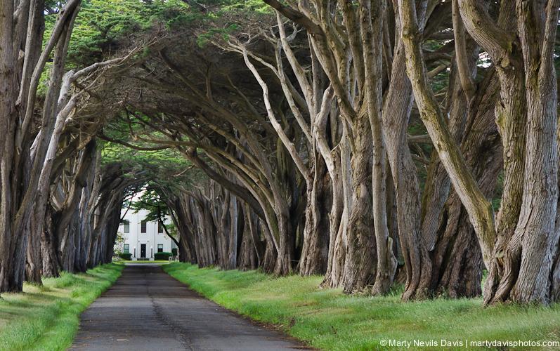 trees_in_CA(c)-5040.jpg
