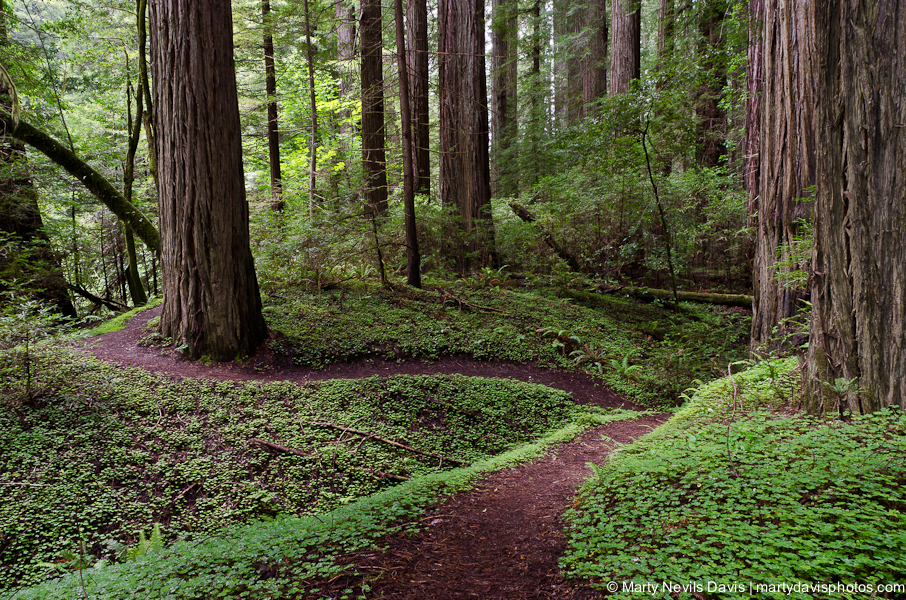 redwoods-5301(c).jpg