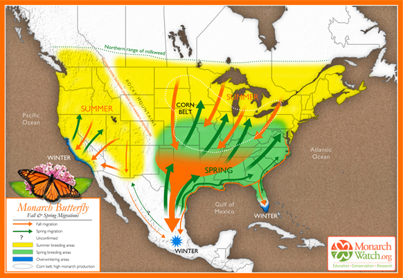 Orange is notes the fall migration, green is the spring migration, and yellow is the monarch's summer range. The overwintering areas are noted in blue. Based on original map design created by Paul Mirocha (  paulmirocha.com  ) for Monarch Watch.