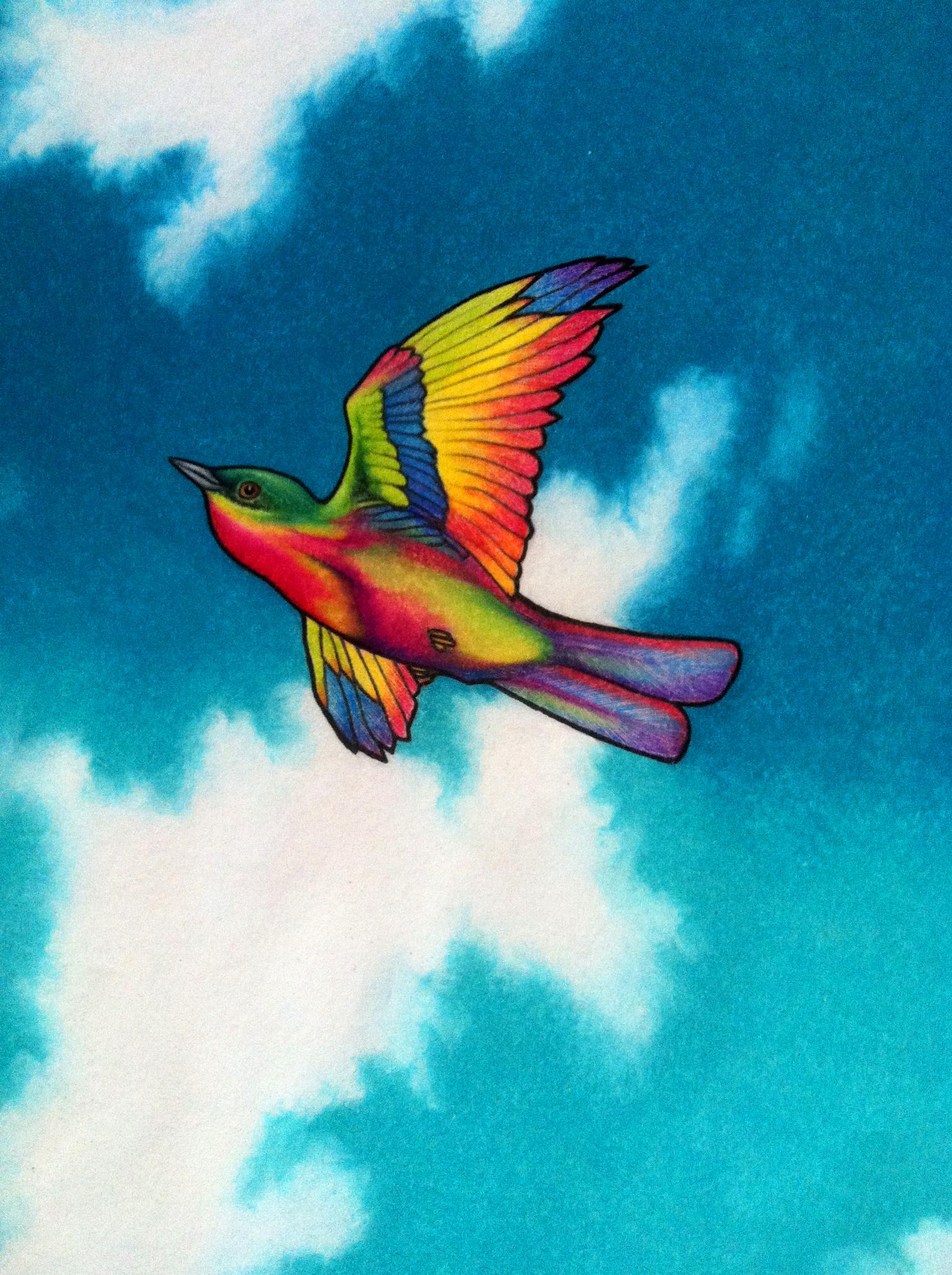 bird_web.jpg