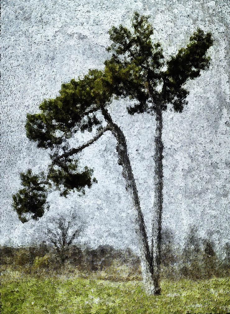 michaeleastman-forestparkforever-3.jpg