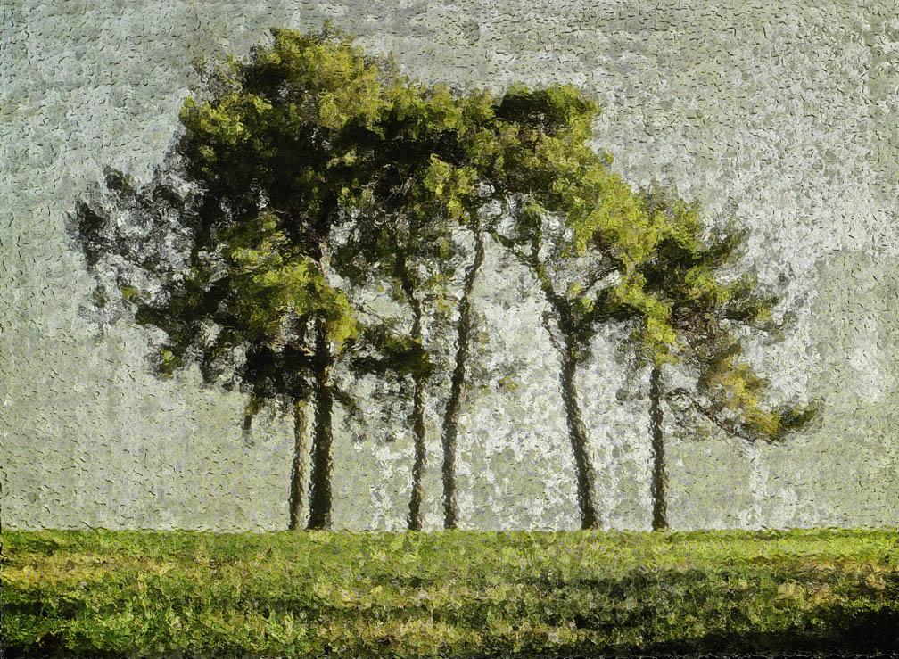 michaeleastman-forestparkforever-5.jpg