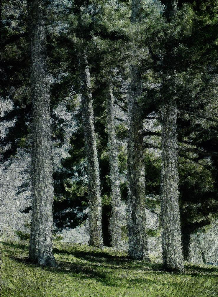 michaeleastman-forestparkforever-8.jpg