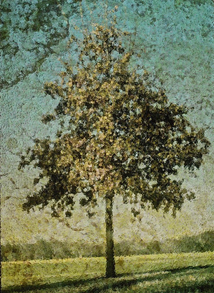 michaeleastman-forestparkforever-7.jpg