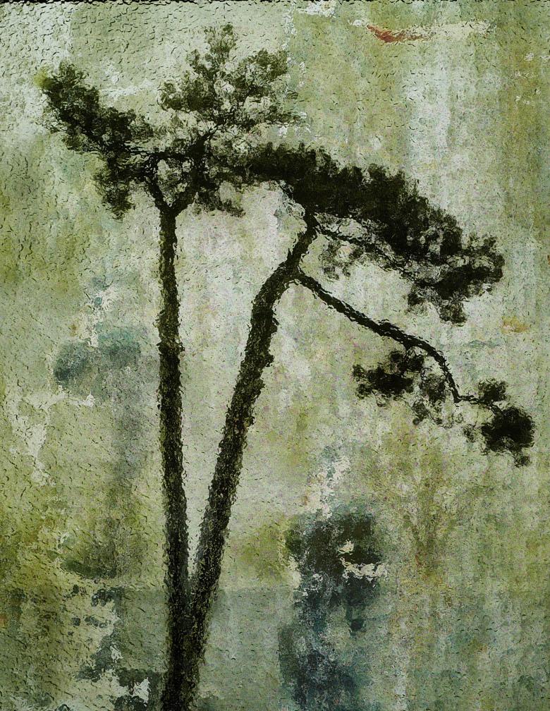 michaeleastman-forestparkforever-19.jpg