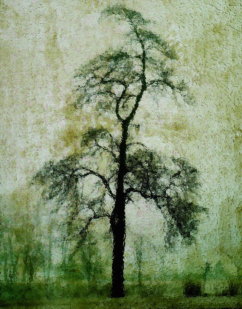 michaeleastman-forestparkforever-20.jpg