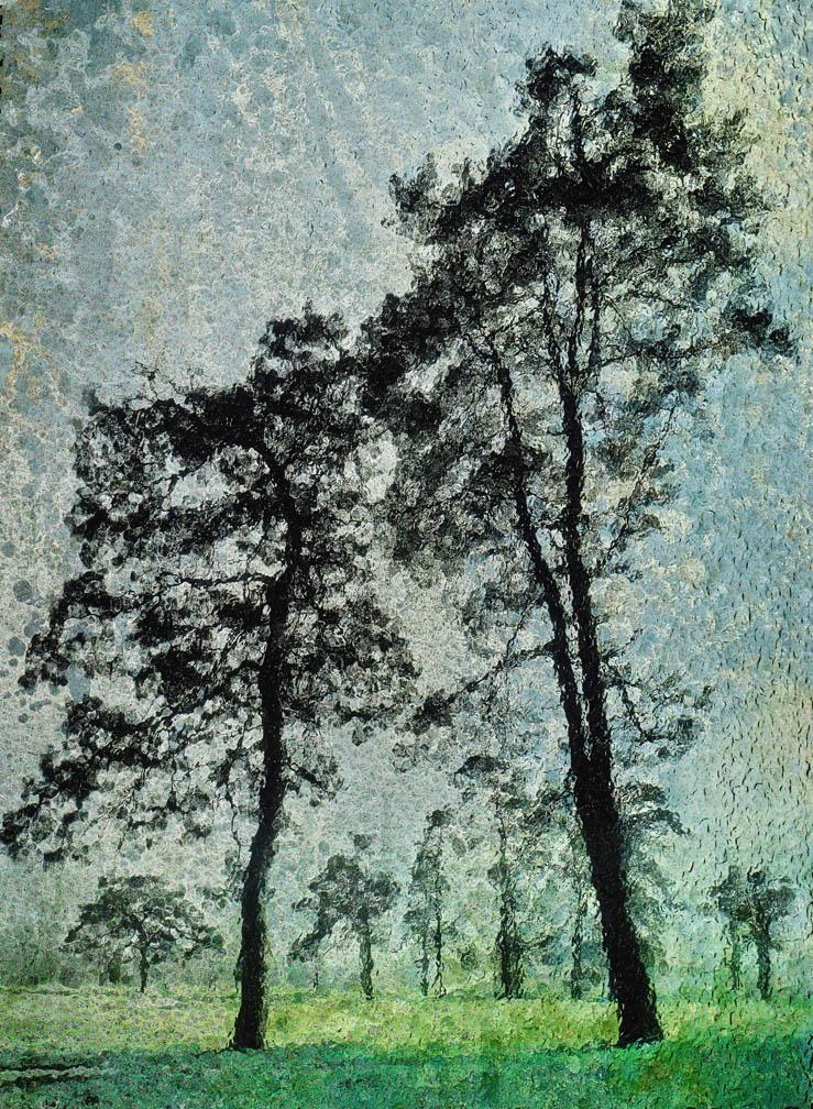 michaeleastman-forestparkforever-30.jpg