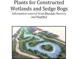 WETLAND PLANTS BOOKLET