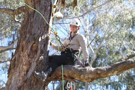 Reannan Honey conducting field work, climbing trees is all part of the fun. Image courtesy of Reannan Honey.