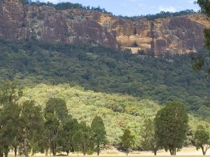 NSW BIODIVERSITY REFORMS BULLETINS