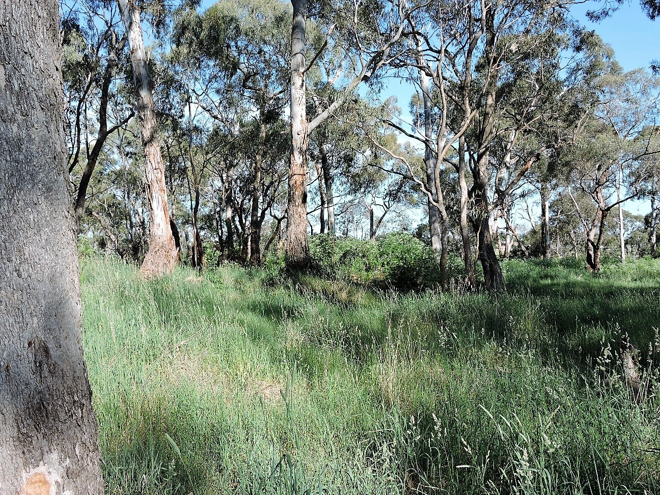 The site following removal of weeds by the forest mulcher