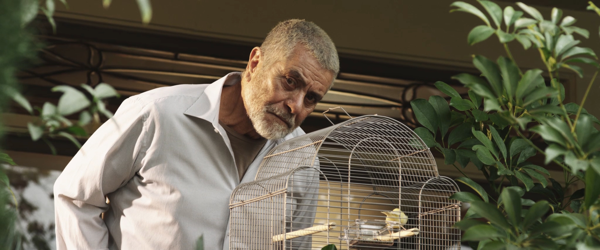 Farewell My Bird