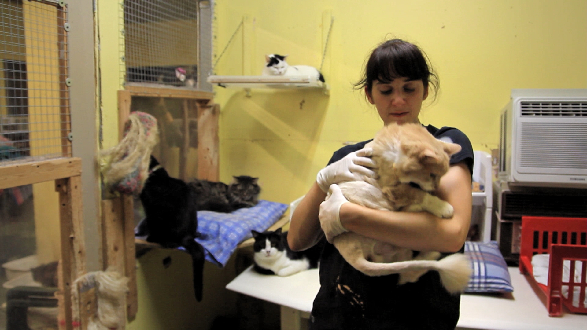 No Kids For Me, Thanks - Melissa Berniqué has been a stepmother on several occasions, which made her realize she didn't want kids of her own. She volunteers several days a week at a cat shelter.