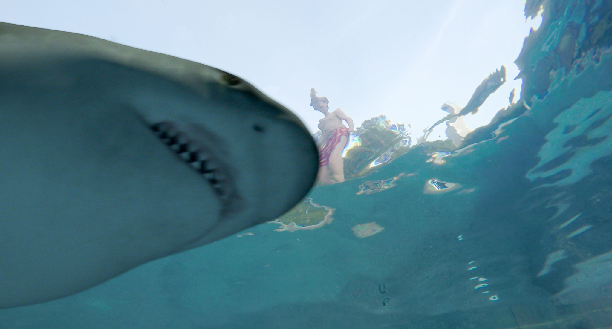 Shark Attack - Anyone for a dip in the pool?