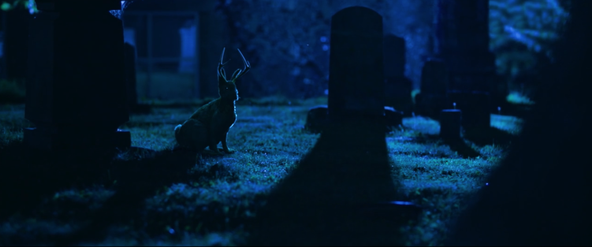 """Looking for the Jackalope - """"The Jackalope"""", featuring the voice of actor Stephen Root"""