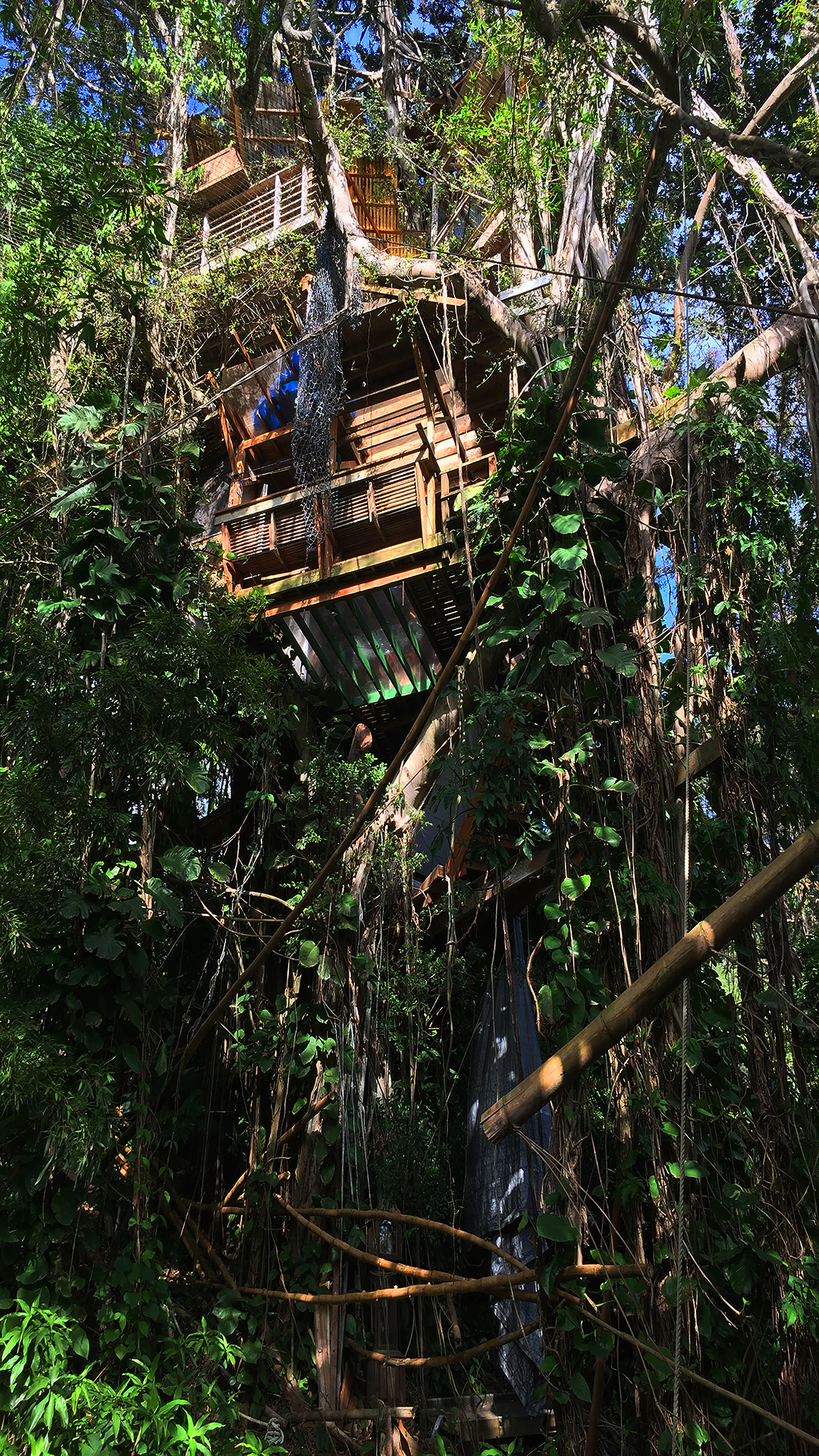 The Bridge - The five-story treehouse in Hawaii's Manoa Valley