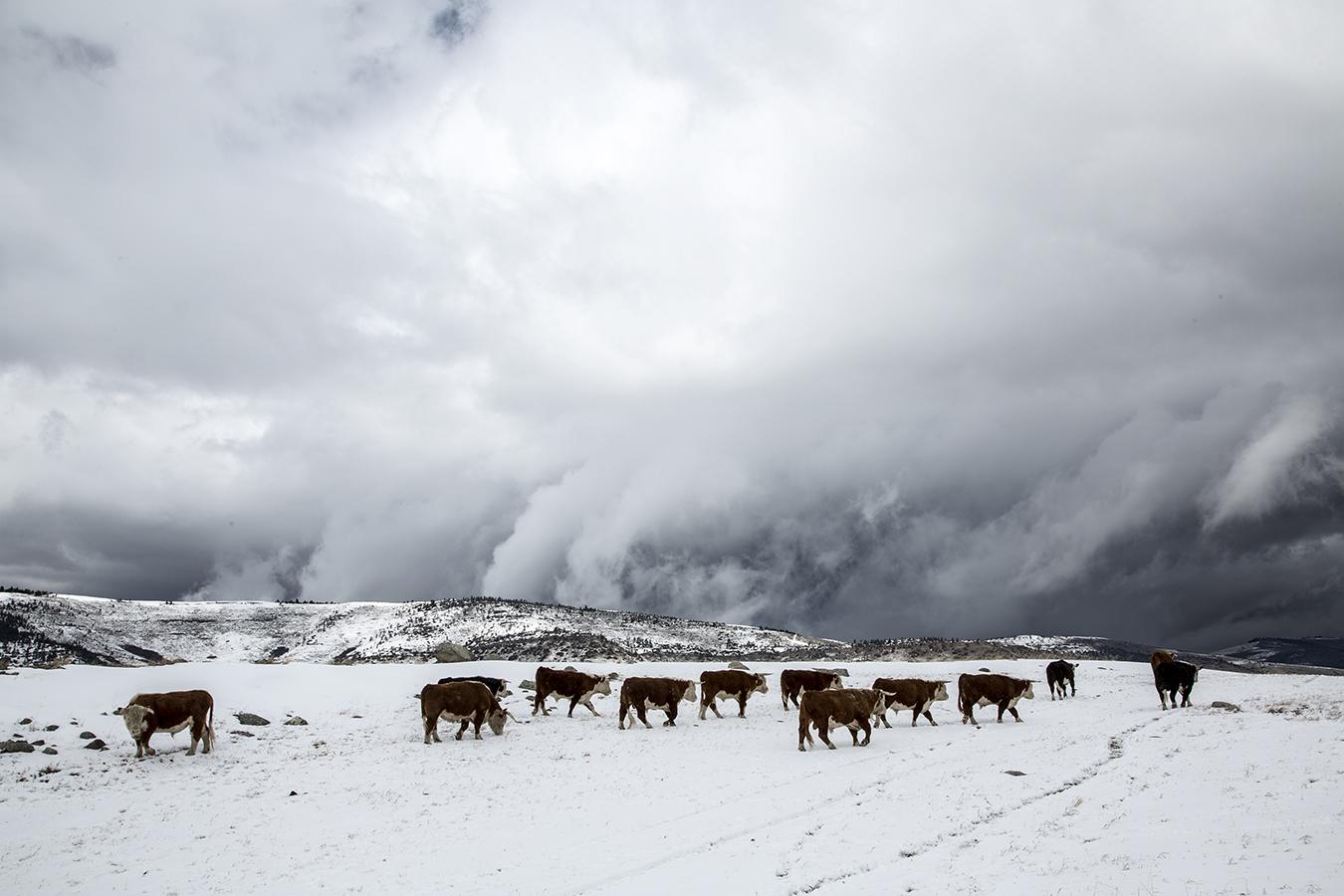 John Cows.jpg