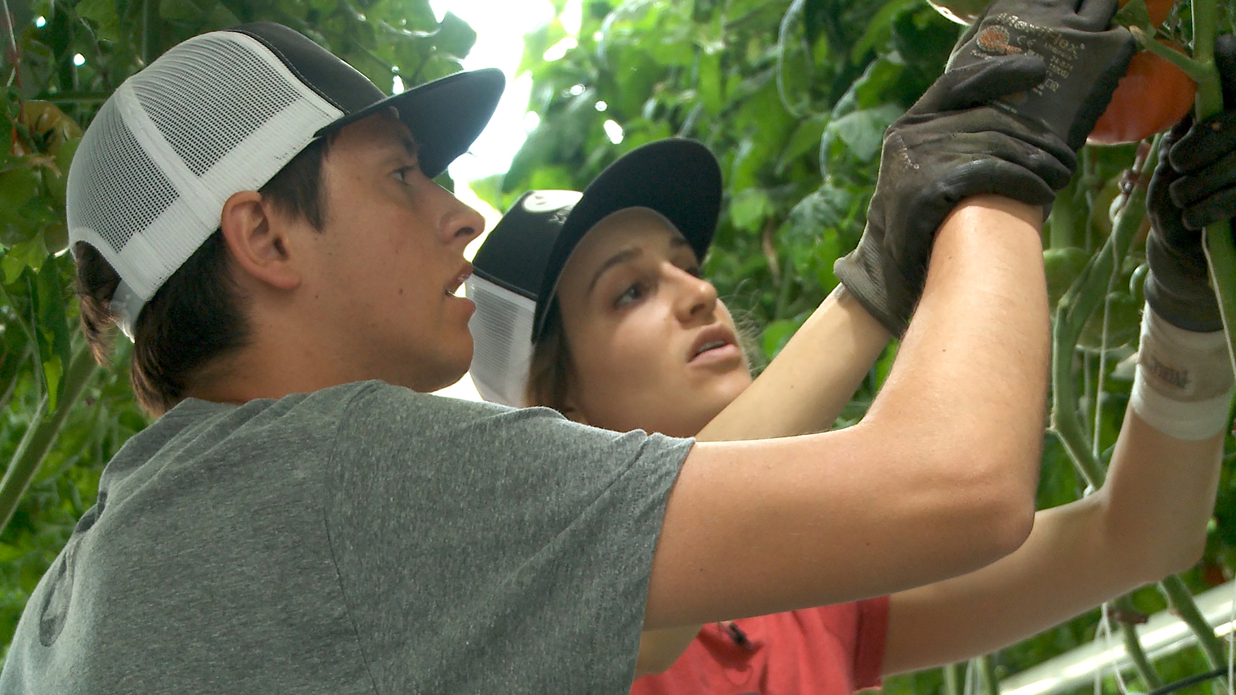 Joelle helps Ty learn how to prune a tomato plant.