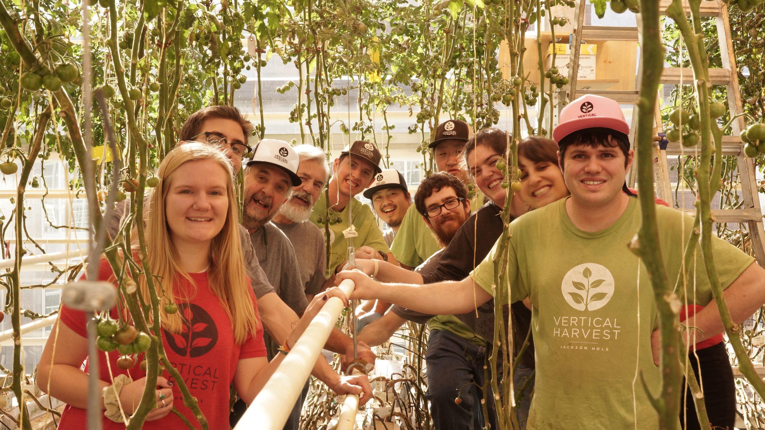 Vertical Harvest's tomato team.
