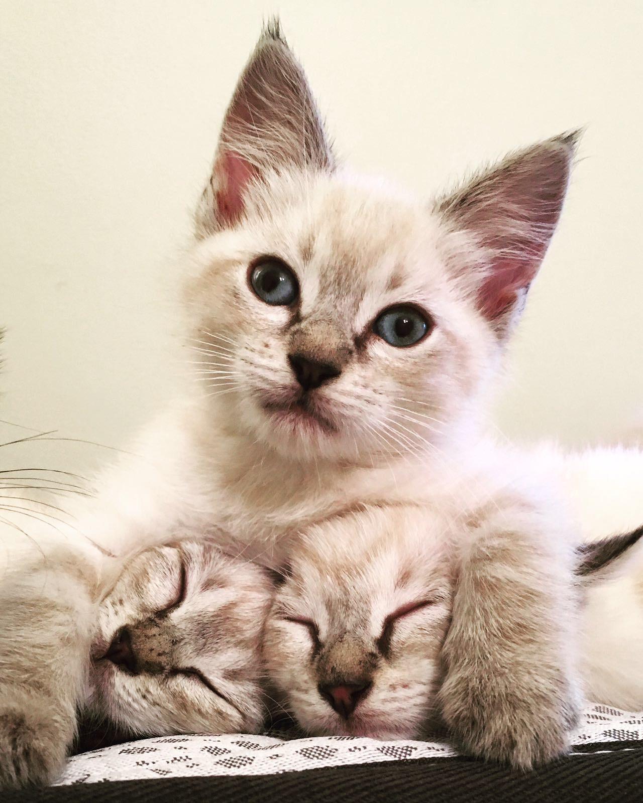 Hugging cats.jpg