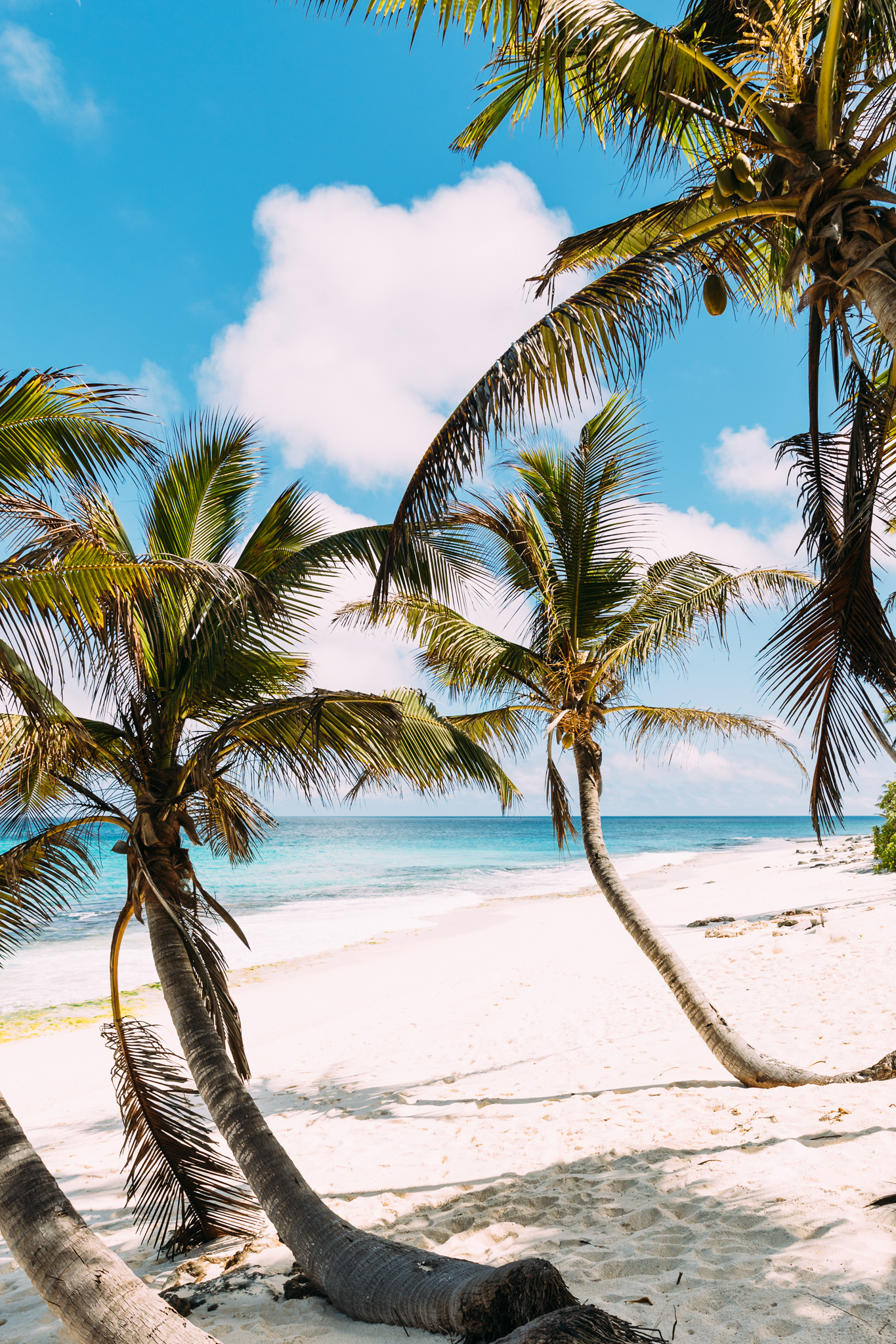 A tropical private-island scene of white sands with leaning coconut trees and bright blue waters on North Island