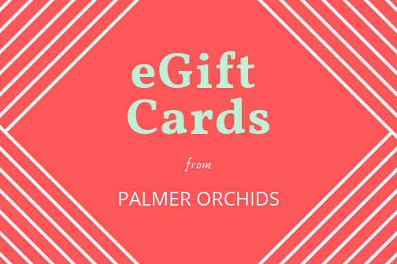 eGift Cards from Palmer Orchids.png
