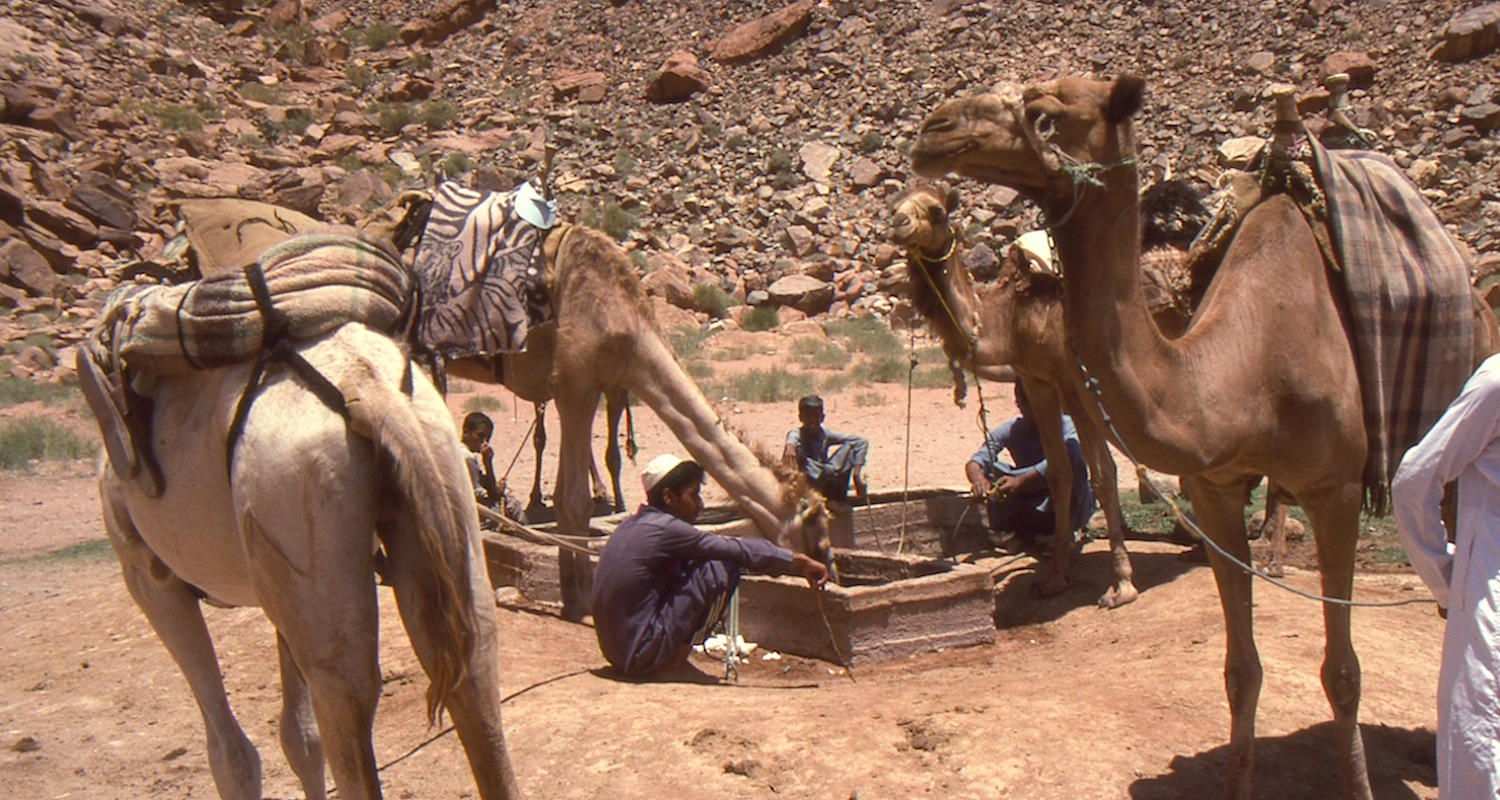 Watering camels at the Spring of Lawrence, Wadi Rum, Jordan.