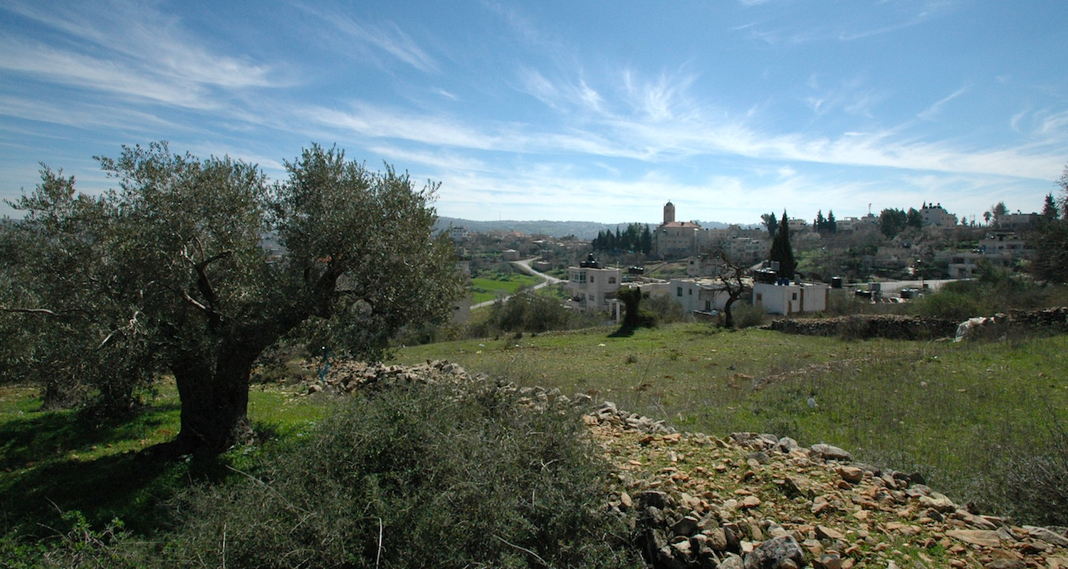 Iconic scenes from the Heartland always include terraced fields and olive trees. The scene was drawn from the outskirts of the village of Birzeit, Palestine.