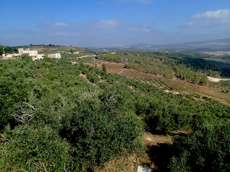 View back to Sepphoris from the trail .