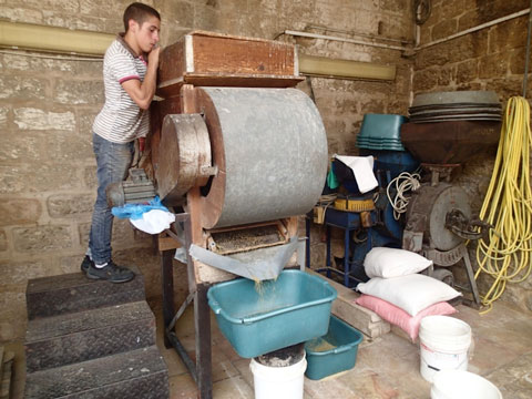Grain processing in the family-owned el-Babour Mill.