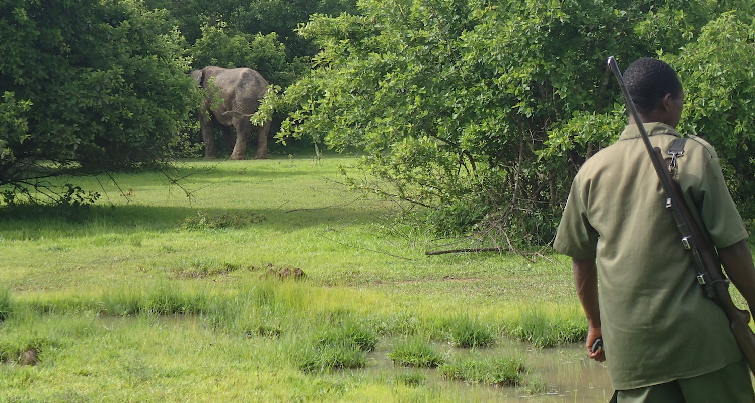 Our first view to an elephant in the wild.