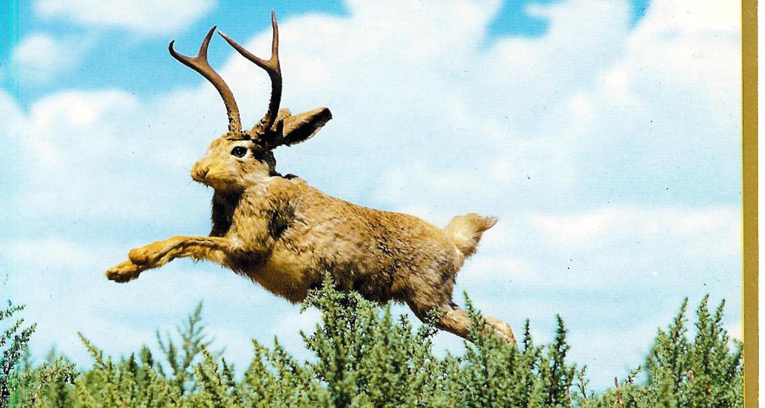 If Diodorus had visited the American West, he would have loved our proud Jackalope. Image from    here   .