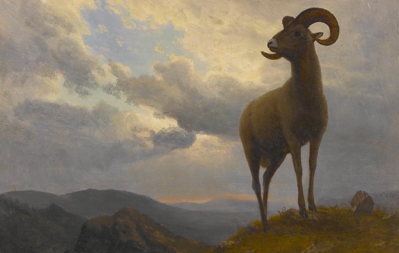 "Albert Bierstadt's ""Bighorn Sheep,"" ca. 1876-1879. Image from  here."