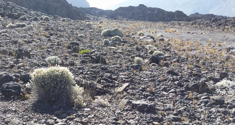 No lack of ammo on Kilimanjaro.