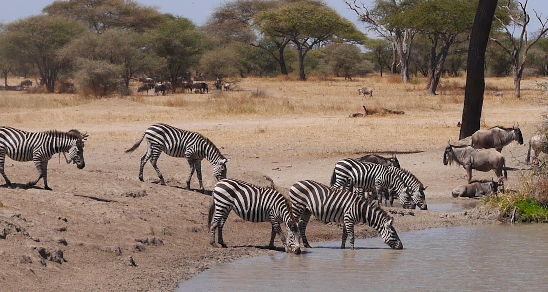 Zebra and wildebeest were everywhere.