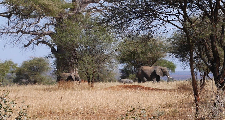 Three elephants crossed our path.