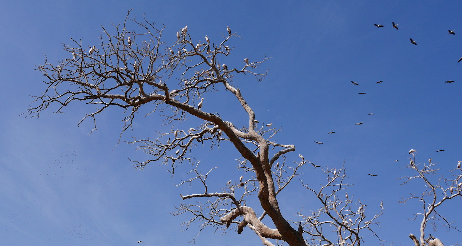 Storks and a poo-spangled. tree.