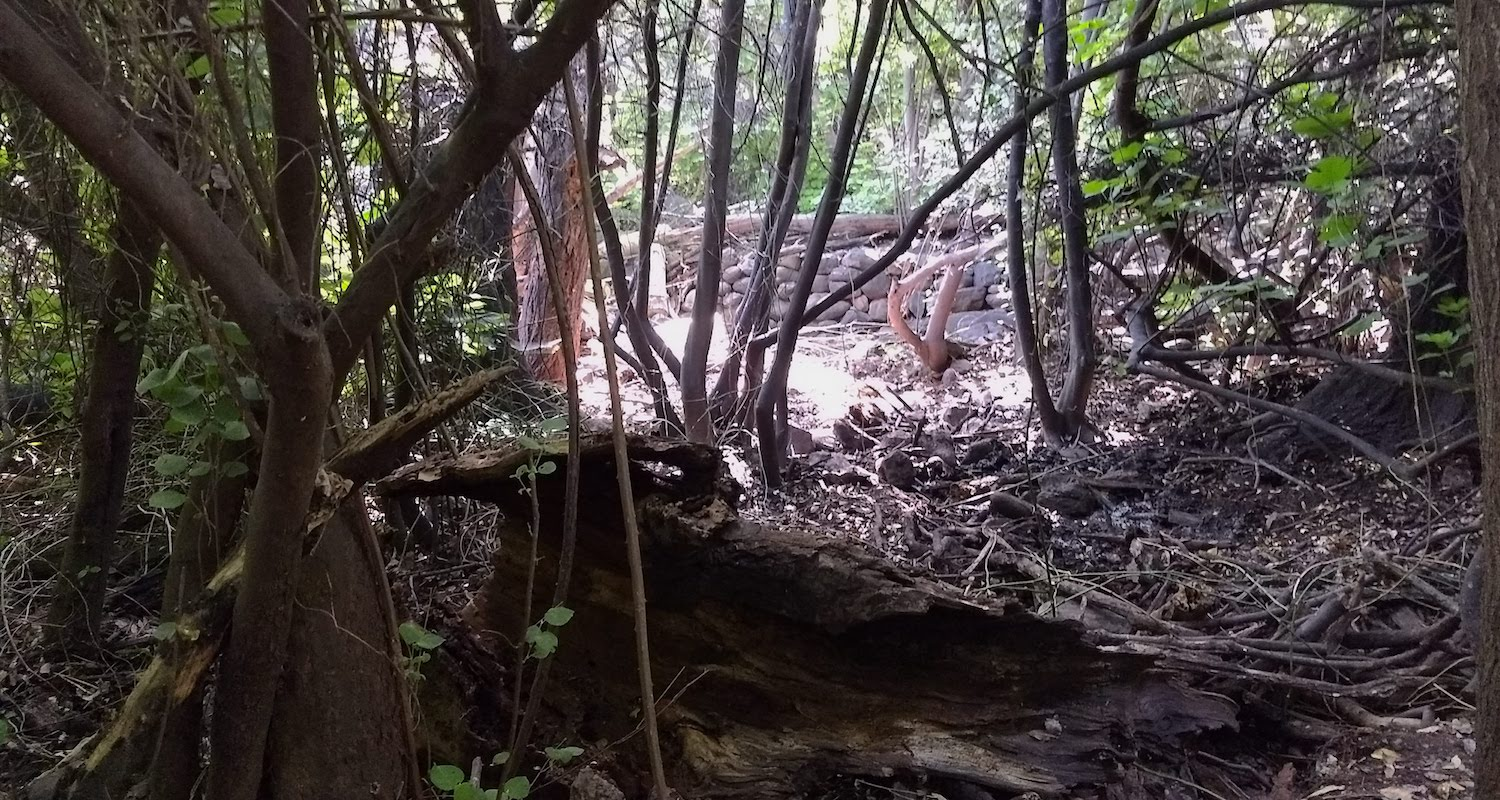 The Tel Dan Nature Reserve is thickly forested. It is a great place to find lurking archaeological remains and, at times, other sorts of lurking things. Image by Bible Land Explorer Priscilla Crosland.
