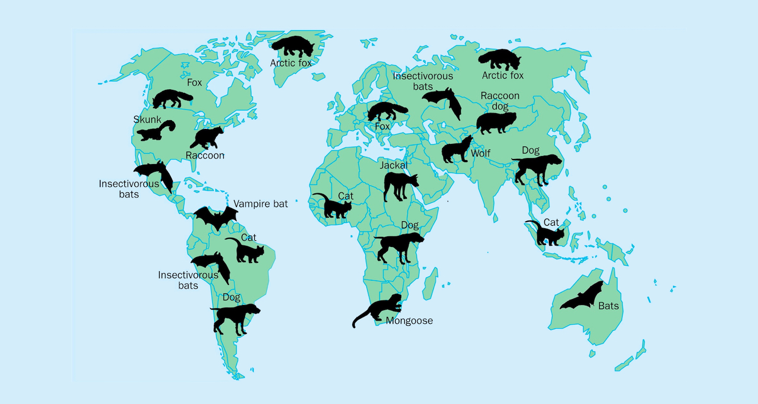 Rabies Lyssaviruses are found worldwide, in a wide range of mammal hosts. For graphic and more, see  here.