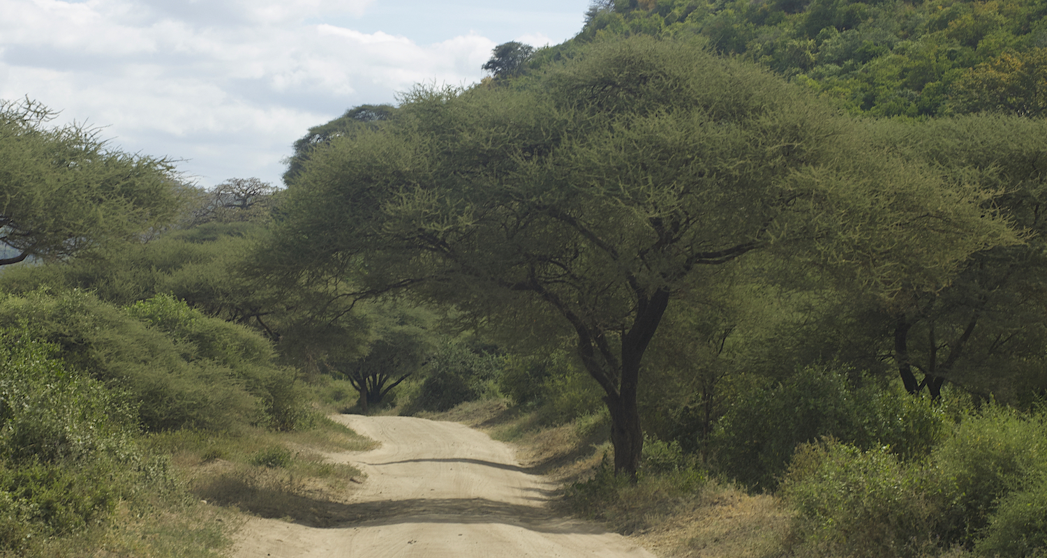The dirt road into Lake Manyara National Park. Lake Manyara sits in the Great Rift Valley and is one of Africa's largest lakes. Like Israel's Dead Sea, it has no outlet. Unlike Israel's Dead Sea it is shallow and alkaline.