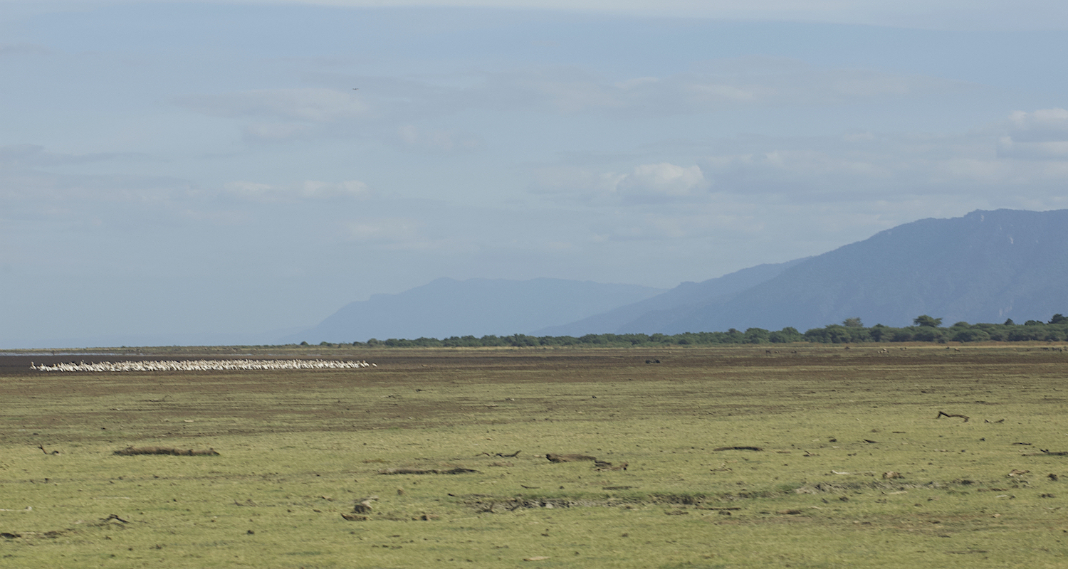 "An ""island"" of pink flamingos on the bed of Lake Manyara. The lake is broad and shallow, growing in the rainy season and shrinking in the dry season."