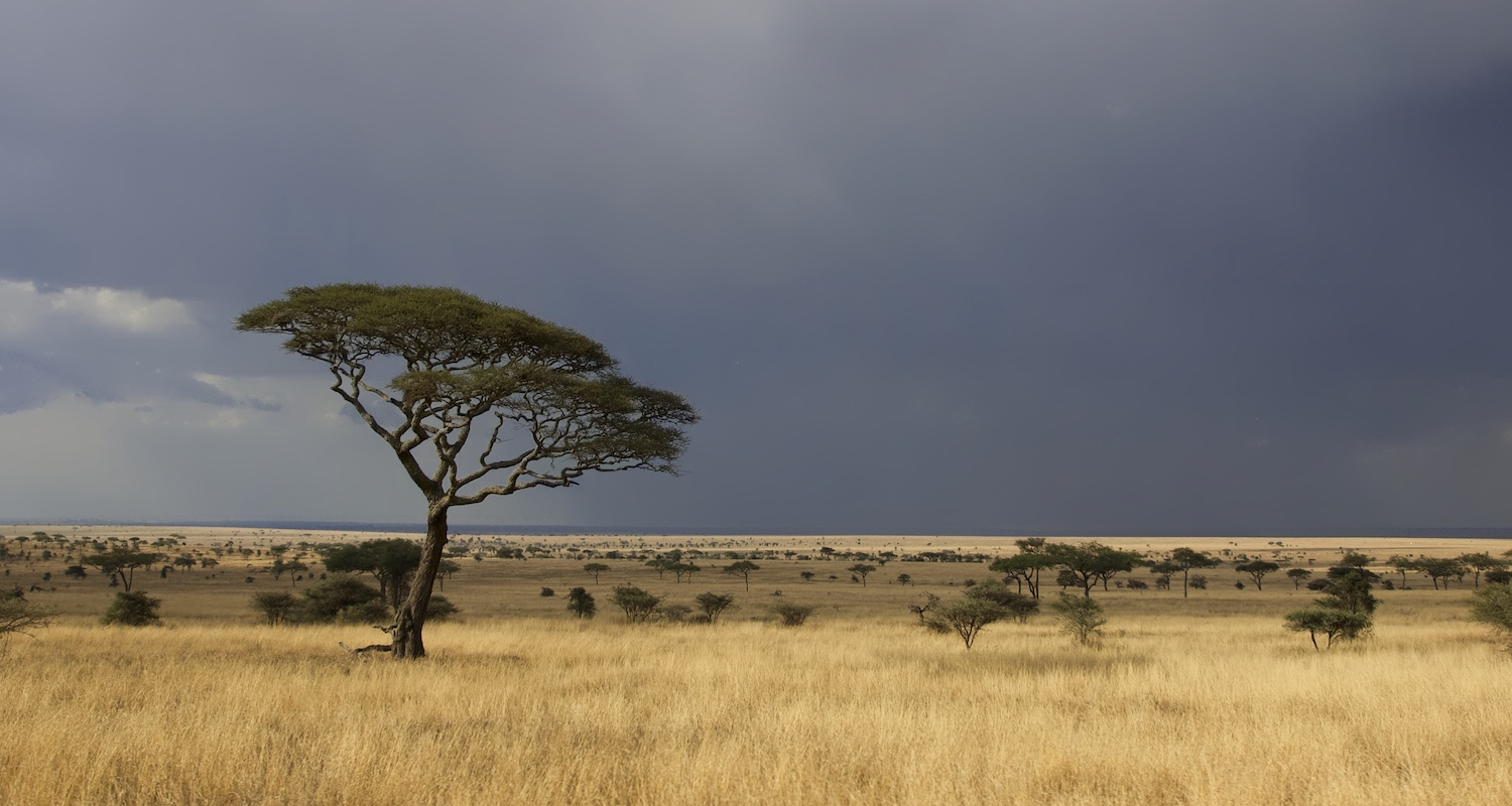 The African Serengeti is a place of wonder.